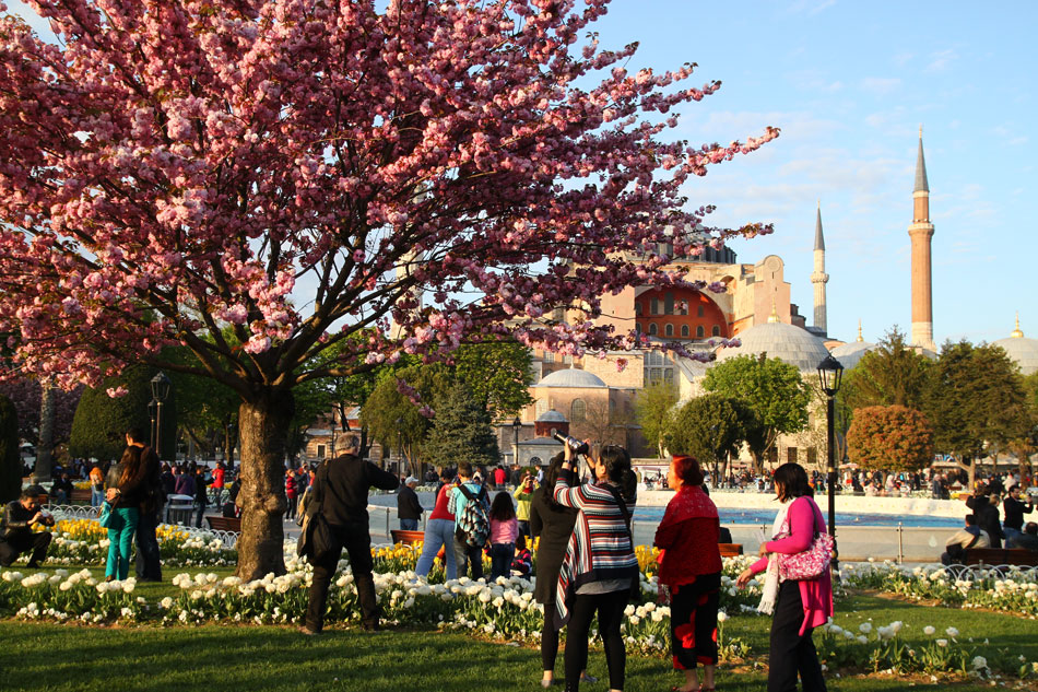 istanbul ayasofya cherry blossom