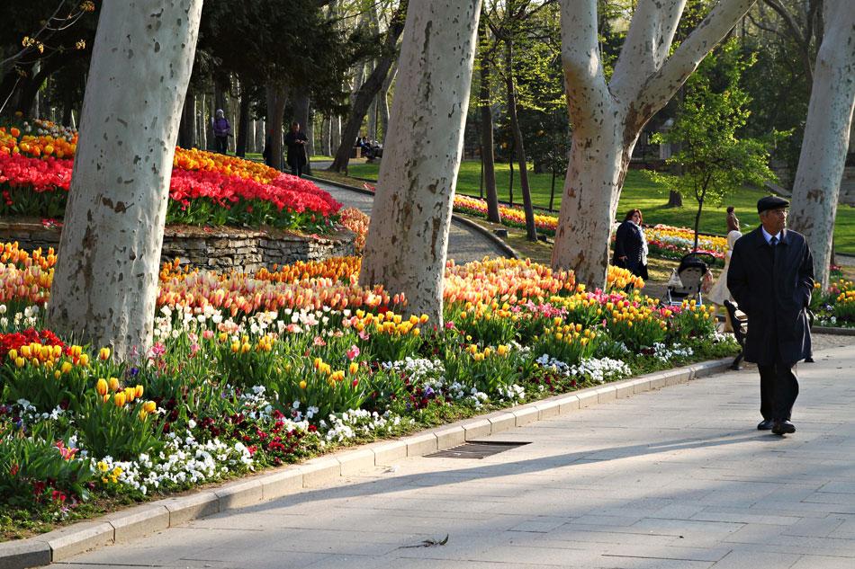 istanbul tulip festival gulhane park